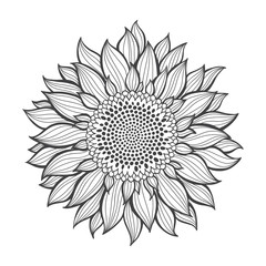 Sunflower.Sketch. Hand draw vector illustration, isolated floral element for design on white background. Outline drawing.