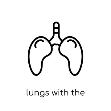 Lungs with the trachea icon. Trendy modern flat linear vector Lungs with the trachea icon on white background from thin line Human Body Parts collection