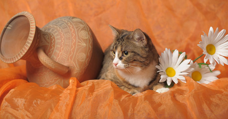 brown with white cat on an orange background with daisies