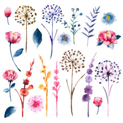 Watercolor set of botanic floral blooming natural elements. Wild flowers, twigs and leaves.