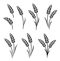 black abstract wheat ears hand drawn set