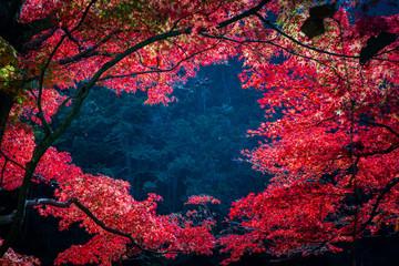 Closeup beautiful maple leaves with heart shape