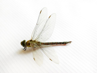 Dragonfly on a white sheet./