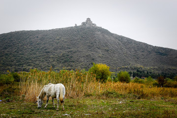 Mountain landscape with grazing horse