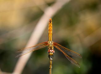 eine Libelle auf einer Pflanze