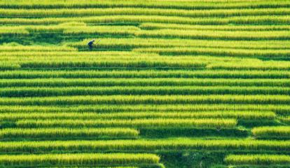 Guizhou rongjiang county farmland