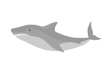 Dangerous fish shark. Aquatic predator from the sea
