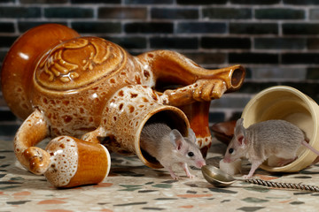 Two mice on countertop in the kitchen on background of brick wall. One mouse comes out of an overturned ceramic jug. The second mouse overturned the cup.