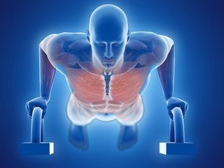 3d rendered medically accurate illustration of a man doing pushups