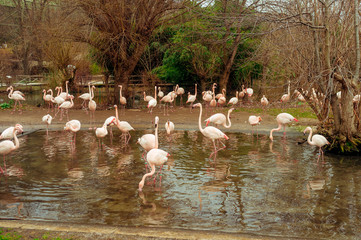 Group of flamingos wading in a pond on a bright sunny day
