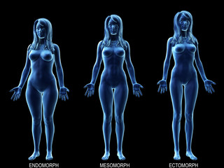 3d rendered medically accurate illustration of the female body types