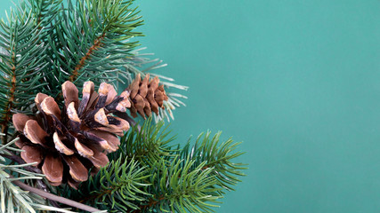 twig with pine cones background