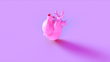 Pink Anatomical Heart Concept 3d illustration 3d render