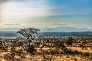 Early morning landscape, Samburu National Reserve, Great Rift Valley, Kenya. The unfenced semi arid savannah grassland is dotted with acacia and thorn trees. Striped hyena in foreground. Copy space.