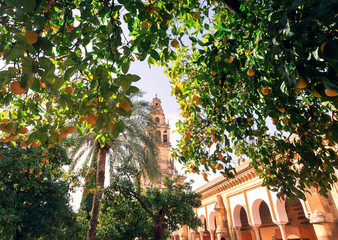 Garden of 8th century arabic mosque, the famous Mezquita, Cordoba. Mosque-Cathedral of Andalucia and many orange trees around, Spain