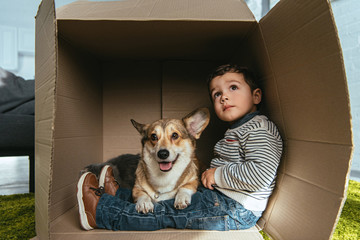selective focus of welsh corgi pembroke sitting with little boy in cardboard box