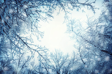 Crowns and branches of trees covered with snow against the winter sky. Winter holiday background.