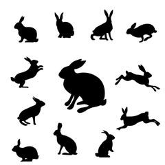 Rabbit Set Isolated