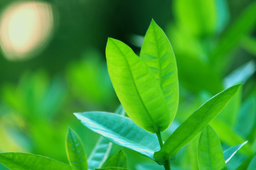 nature view of green leaf. nature background