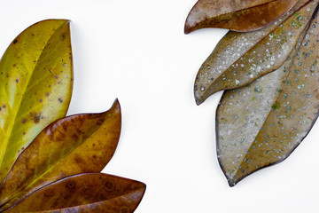 Bundle of leaves white background
