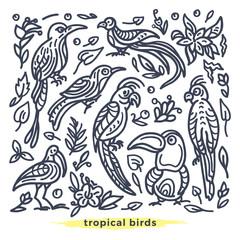 Vector set of wild tropical bird