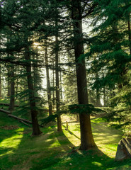 Kalatop Wildlife Sanctuary- a beautiful clearing in the forest, green, grass, meadow, Shire