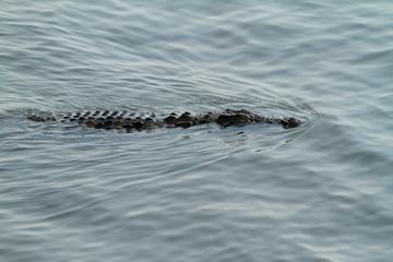 Krokodile beim Sonnenbad im Chobe Nationalpark