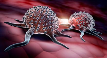 Teilende Krebszellen - Mitose