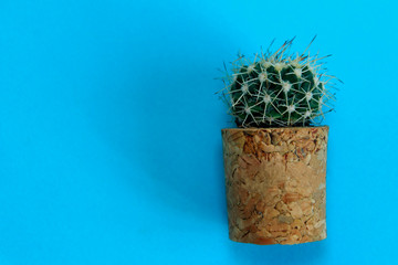 Abstract Nature Background. Natural Background. Small Cactus Indoors. Blue Colors.