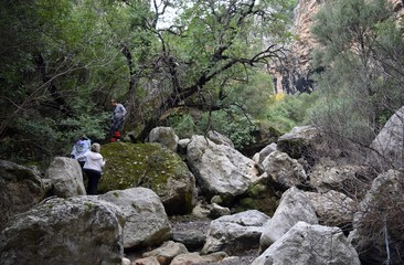 Campaign.Backpack tourism in pine forest. Turunc. Turkey