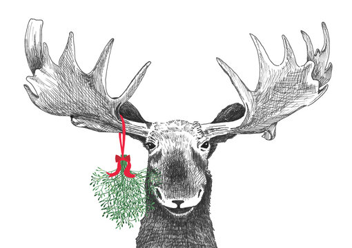 Fun Christmas moose with mistletoe in funny holiday tradition of kissing under the mistletoe, humorous Christmas card sketch of moose head that is a hand drawn animal in love background illustration