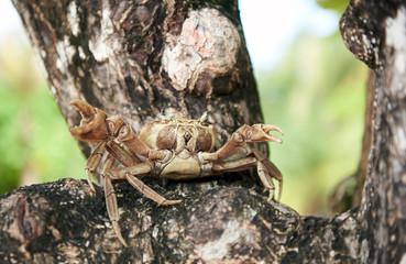 7878307 Portrait of life crab