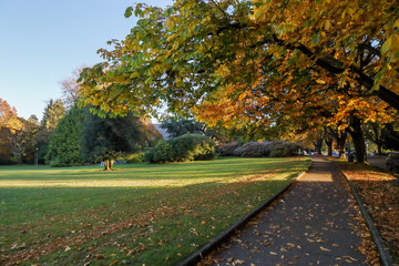 fall colors at Volunteer Park, Seattle Washington