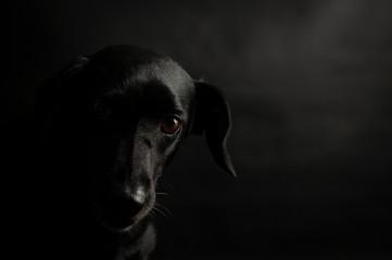 Cachorro Nina
