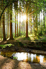 Fototapete - Beautiful forest in spring with bright sun shining through the trees