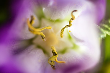 abstract close up flower