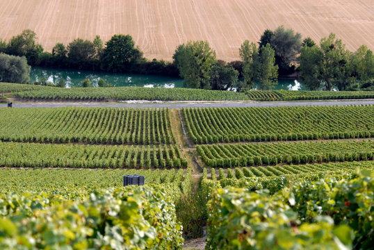 Paysage, vignoble de champagne autour d'Epernay, département de la Marne, France