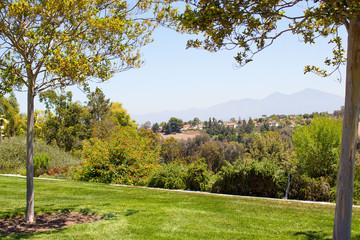 Luscious green vegetation landscape from a park in Laguna Niguel, California