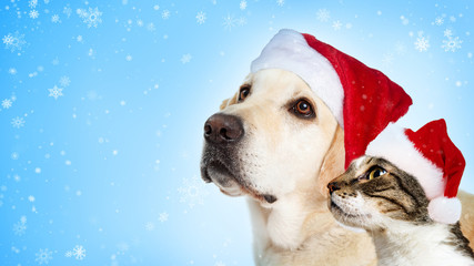 Christmas Dog and Cat Website Header