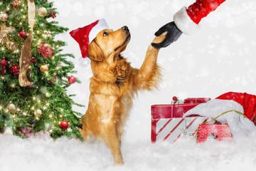 Dog Meeting Santa Claus at Christmas