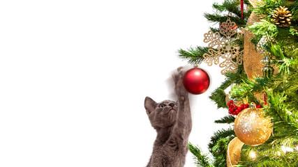 Funny Kitten Batting At Christmas Tree Ornament