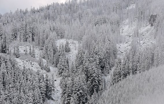 First Snow in West Central Cascades 2018 - 6