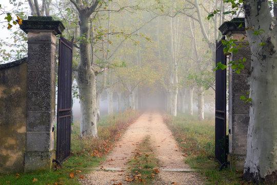 Open iron gate on foggy path