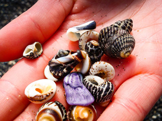 Hand full of colorful stones and mussels