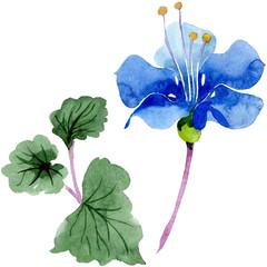 Blue phacelia. Floral botanical flower isolated. Green leaf wildflower. Watercolor background illustration set.