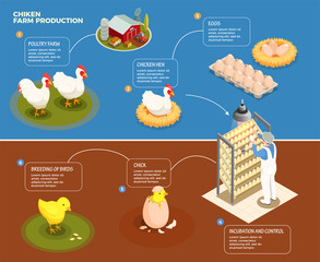 Chicken Farm Production Background
