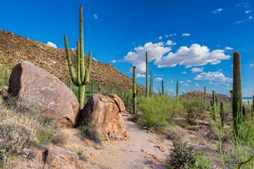 Saguaro National Park near Tucson, Arizona