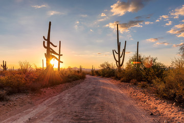 Photo sur Plexiglas Parc Naturel Travel in Arizona desert at sunset with Saguaro cacti in Sonoran Desert near Phoenix, Arizona.