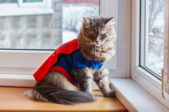 Kitty in the carnival costume on the windowsill