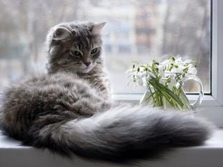 Beautiful kitty on the windowsill Wall mural